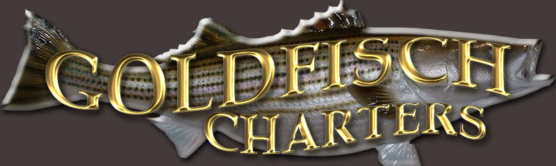 Goldfisch Charters fishing the Chesapeake Bay with Captain Dave Fishcher